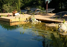 Can you convert a regular inground pool into a natural pool?